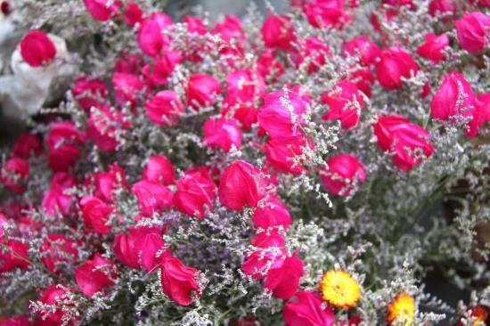 Floralie