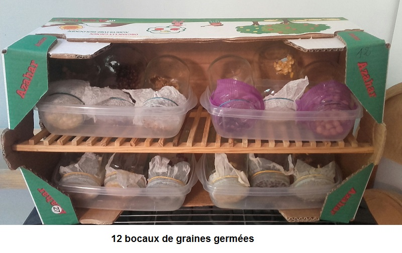 Graines germees 10