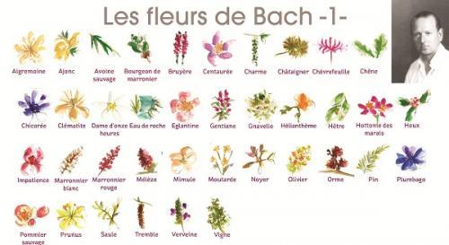 Visuel fleurs de bach 1